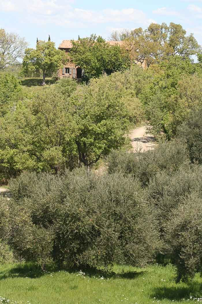 Tuscany Maremma | Podere Santa Pia, view on the house and garden (June)