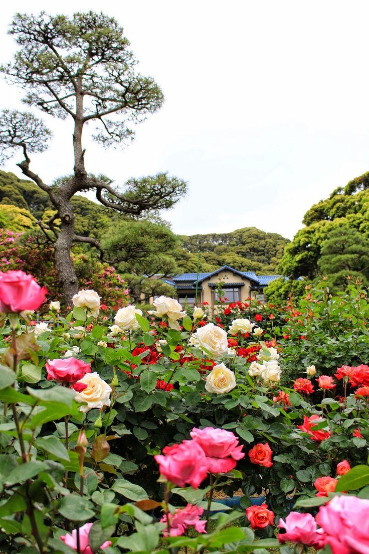 일본 가마쿠라 문학관   신록에 빙 둘러싸인 길을 오르면 커다란 돌로 만든 별장의 문이 나타난다.(중략) 지금의 후작이 일본식과 서양식을 절충시켜 12개의 객실이 있는 저택을 세우고, 테라스부터 남쪽에 펼쳐진 정원 전체를 서양식으로 바꾸었다. 남쪽으로 향한 테라스에서는 정면에 오오시마가 멀리 보이고...- 미시마 유키오, '봄의 눈' 중에서青葉に包まれた迂路を登りつくしたところに、別