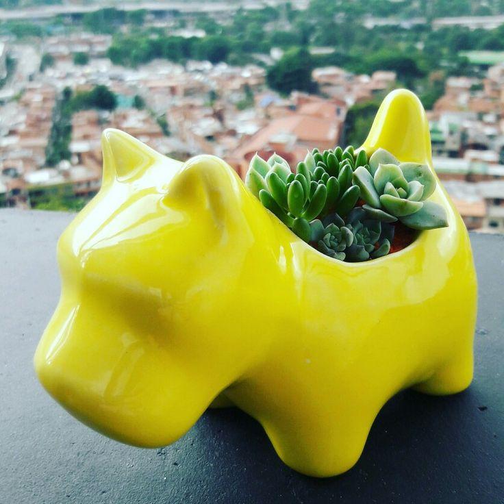 Succulent arrangement. Baby succulents. Suculentas.