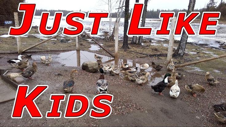 Speed Cleaning #152 Ducks & Winter 2016-17