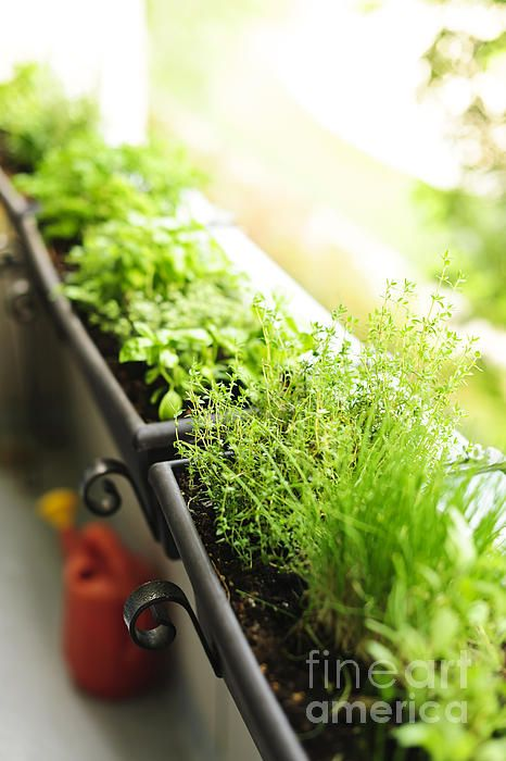 Herb Garden Ideas For A Balcony best 20+ balcony herb gardens ideas on pinterest | patio herb