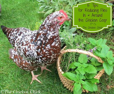 15 Tips to Reduce FLIES Around the Chicken Coop