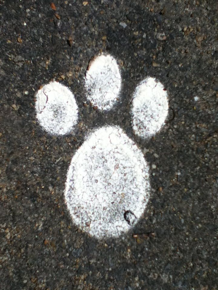 Gallery For > Rabbit Footprints Template