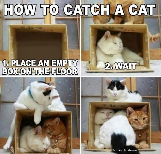 HOW TO CATCH A CAT: 1. Place an empty box on the floor. 2 ...