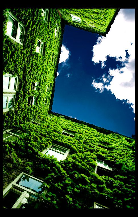 Green Life by 'gnato  http://gnato.deviantart.com/art/green-life-33608067