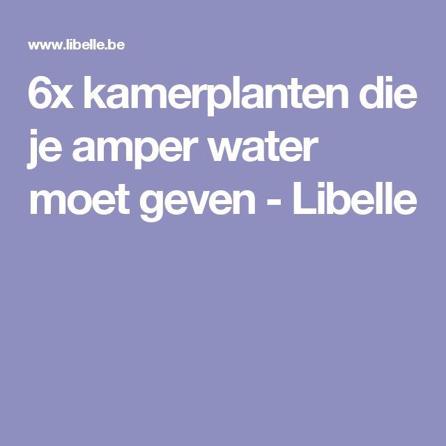 6x kamerplanten die je amper water moet geven - Libelle