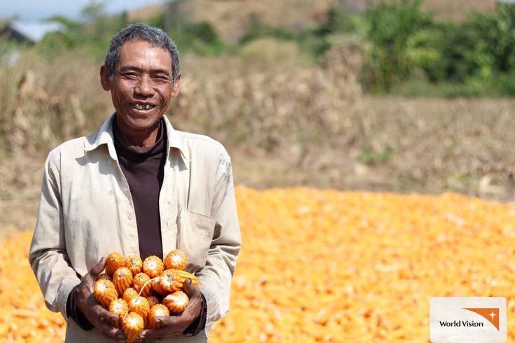 Do you like #corn? 63-year-old Uy Phoch from #Cambodia does! When #WorldVision started working in his community in 2012, Uy Phoch was able to get a loan to buy corn seeds and start his business. Today he has expanded his #farming to five hectares, and grows a whole range of crops – including #papaya and #chilli! A small investment can make a big difference. Photo by Solina Kong, World Vision