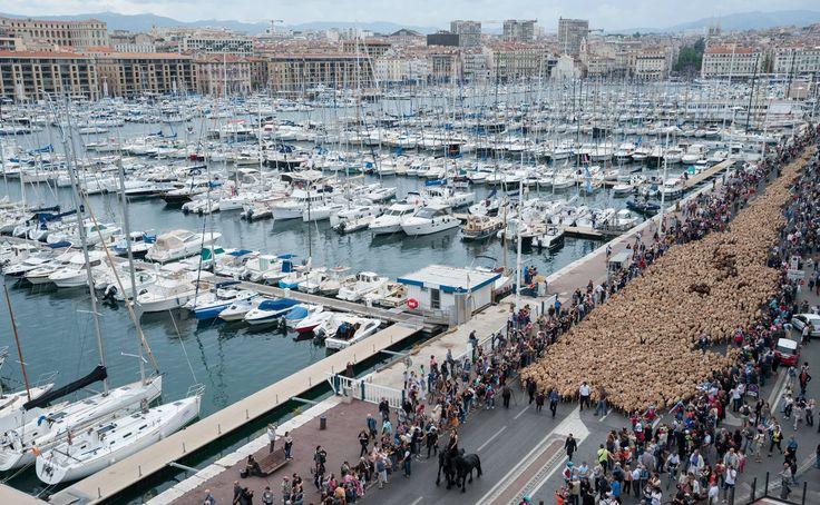 Transhumance Marseille 2013 - cCom2a Marseille communication. Aujourd'hui 4 000 animaux et près de 300 000 personnes ont marchés ensemble pour traverser la deuxième ville de France.