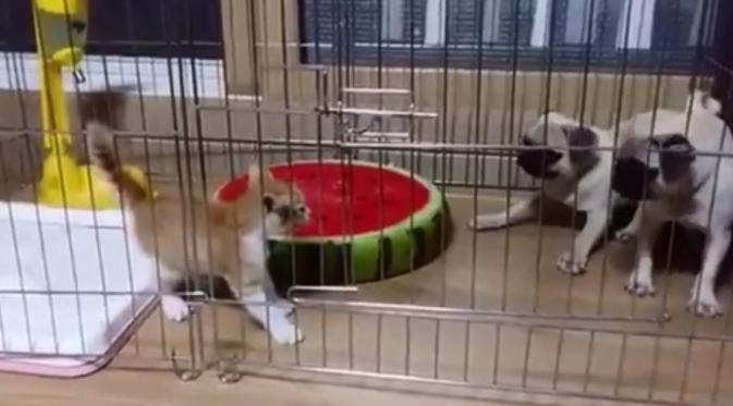 Wow, Ada Anak Kucing Bikin 2 Anjing Ketakutan - http://wp.me/p70qx9-5z8
