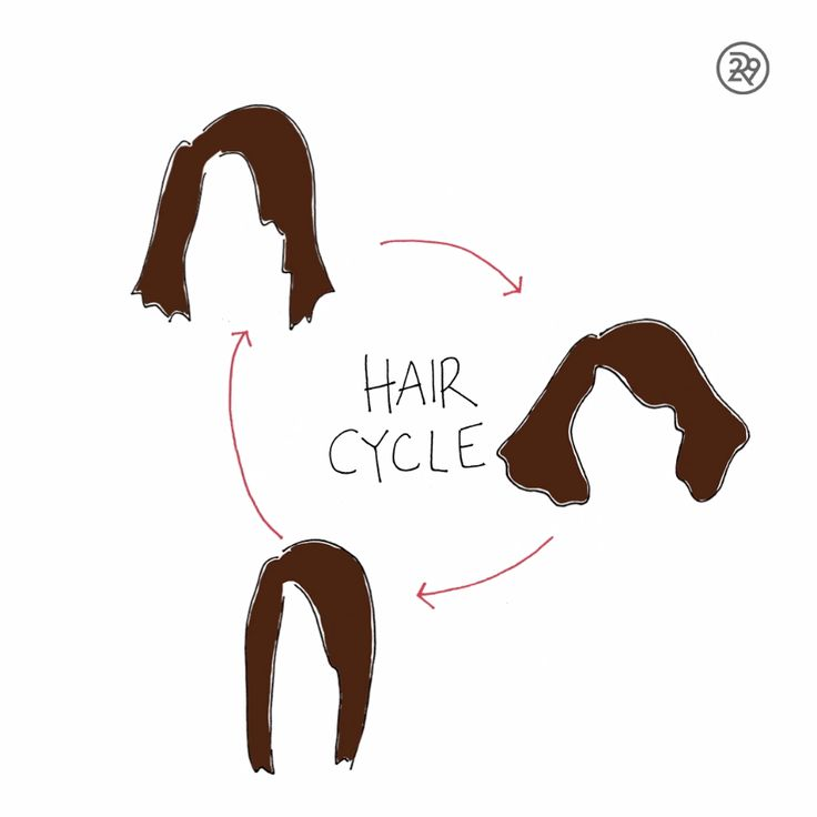 """Hair Cycle"""