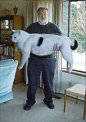 THAT'S A HUGE CAT!