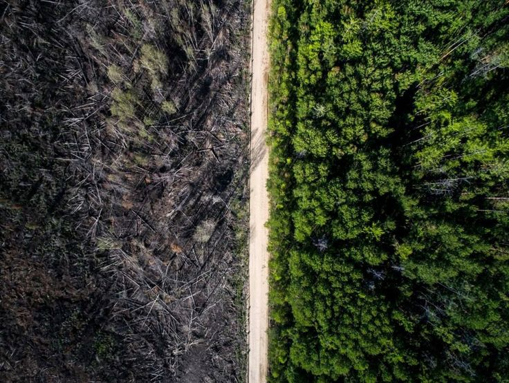 The road that stopped a fire.