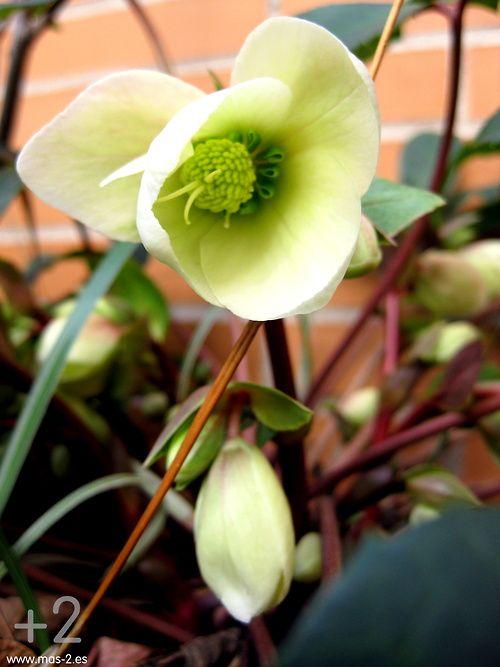 Nos despedimos con las primeras flores de nuestro jardín… ¡feliz fin de semana!