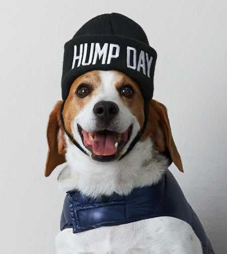 Introducing American Beagle Outfitters. Now, your dogs can match your #AEOSTYLE. American Beagle Outfitters Hump Day Beanie.