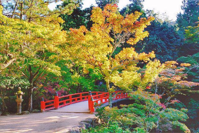 Hiroshima City & Miyajima Island – Cheeserland