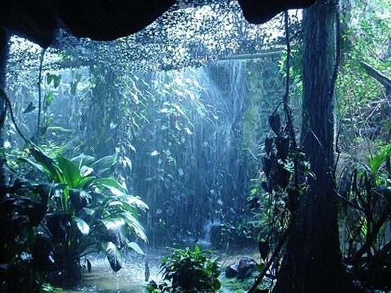 On Rainy Days, Nature can be so Beautiful...