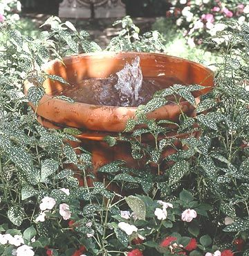One of the simplest water features you can make is a fountain in a container, like this one./