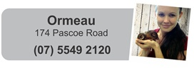 vet ormeau - the vet lounge offers a high level of care, come in and check us out.