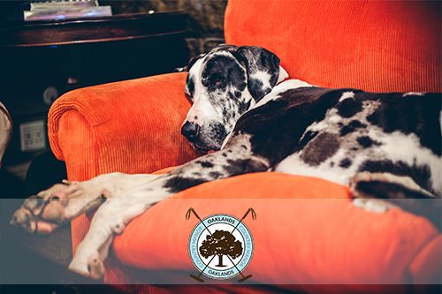 Right in the middle between #Durban and #Joburg, we make a great midway-stop for weary travellers. Drop in and relax with Caesar and the pack! #travel #OaklandsCountryManor