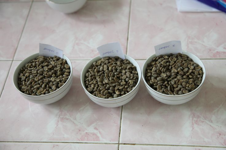 Cupping in Sumatra