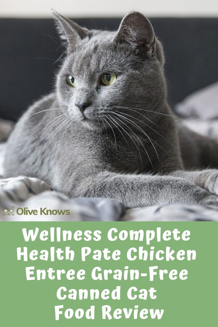 Wellness Complete Health Pate Chicken Entree Grain Free Canned Cat Food Review Cat Food Reviews Canned Cat Food Cat Food