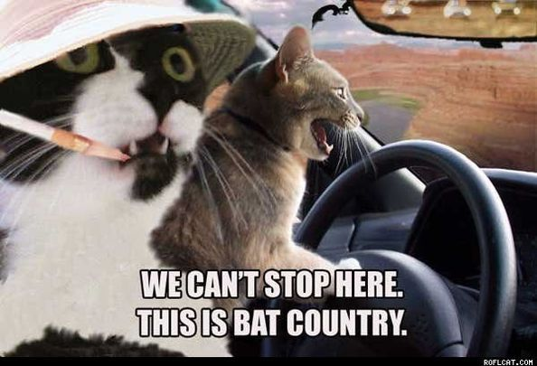 18 Funny Cat Pictures – Road Trip Edition