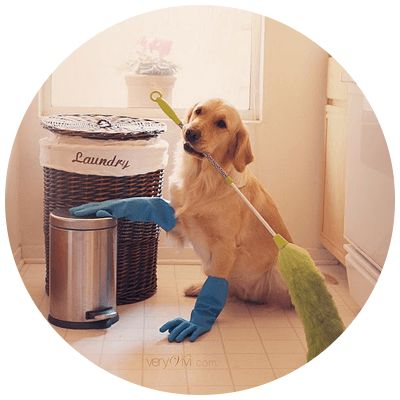 jasa-bersih-kandang