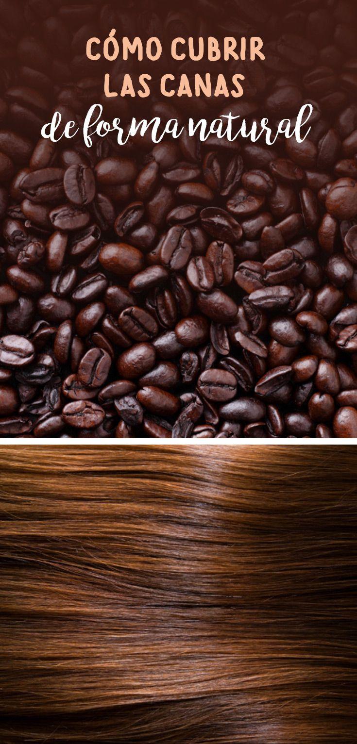 Si tienes el pelo castaño o un tono café en el cabello, te comparto mi tip para que sepas cómo cubrir las canas de forma naturaly sin tener que recurrir tan frecuentemente al tinte. Puedes aplicar este procedimiento para matizar las canas de tu cabello todos los días.