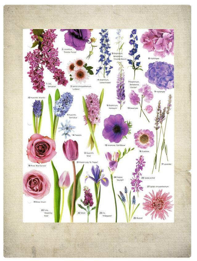 complete guide to purple wedding flowers purple flower - 639×844