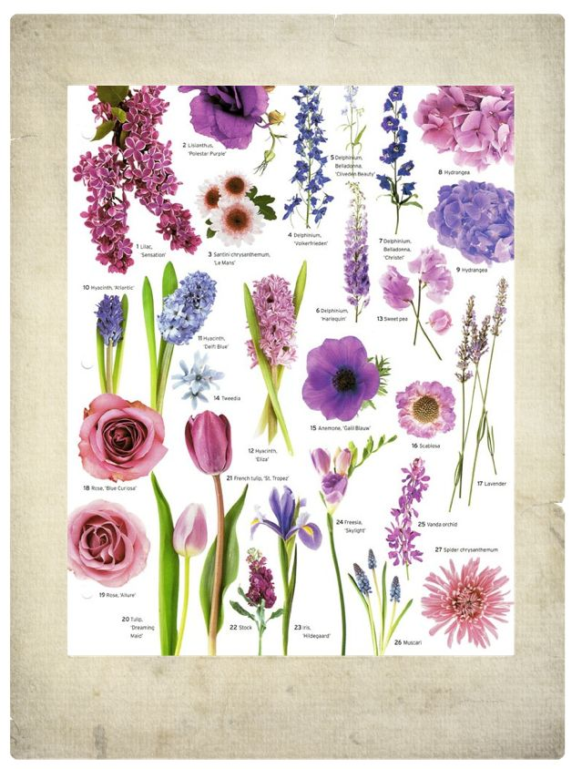 purple flowers - vintage, garden, feminine flowers/ bouquets/ wedding arrangements