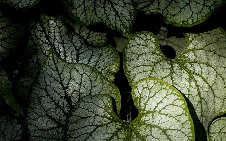 Une occasion unique d'explorer de merveilleux oasis de verdure. Par Patricia Dumais. Ce n'est pas un secret que la ville de Westmount possède une abondance de magnifiques jardins. Des petits jardins coquets aux grands domaines sur les flancs de la montagne, la ville ne manque de verdure pour régaler nos yeux. WestmountMag.ca