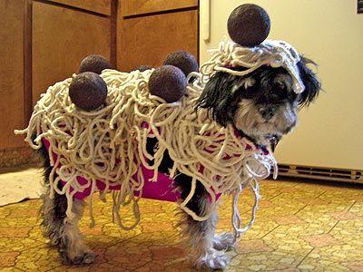 Le chien spaghetti-boulettes à la viande. Le plat de spaghetti est typique de l'Italie. Autant dire que ce costume a du être conçu sur mesure pour cette adorable petite bête.