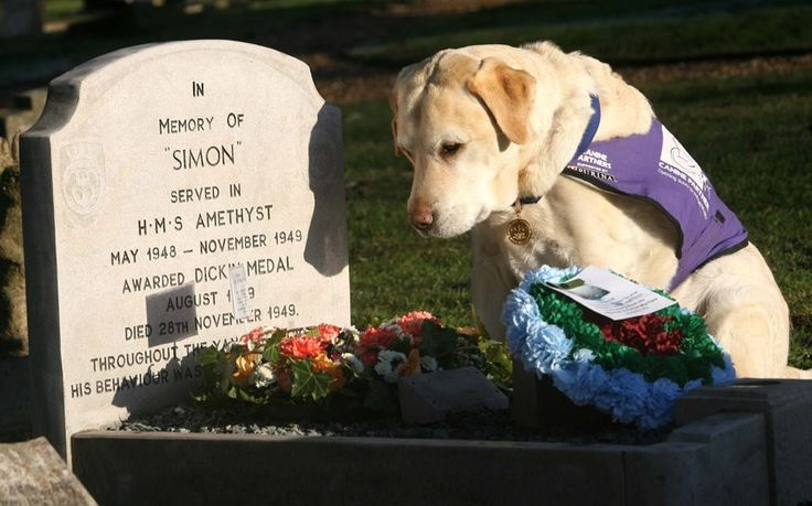 Endal the Labrador was voted Dog of the Millennium and given the PDSA's coveted Gold Medal for saving his master Allen Parton's life in 2001 after he had been knocked from his wheelchair by a car. Endal dragged his owner into the recovery position, pulled a blanket over him and ran to a hotel barking for help. He's seen here at the grave of Simon the cat at the re-opening of the PDSA Animal Cemetery in Ilford.