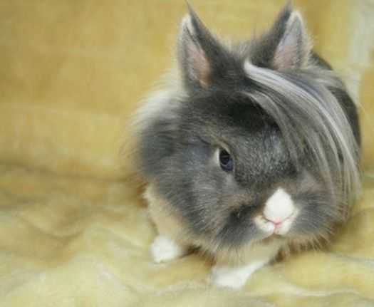 I'm cool!: Funny Pics, Funny Shit, Angora Rabbit, Funny Pictures, Funny Stuff, Emo Bunnies, Carrots, Funny Animal, Emo Hair