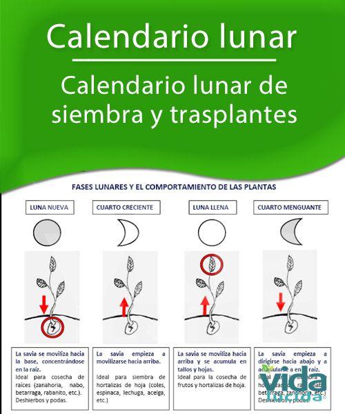 Calendario lunar de siembre y cultivos.