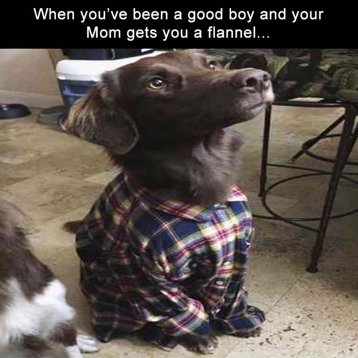 Funny Animal Picture Dump Of The Day 24 Pics: Best 25+ Funny Dog Pics Ideas On Pinterest