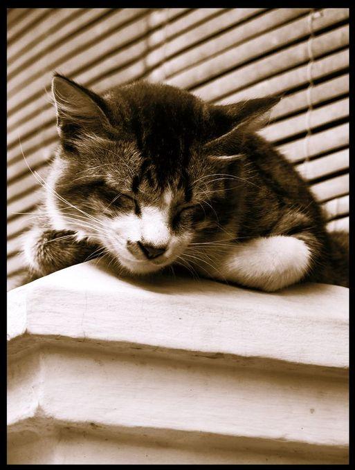 "Photo ""kucing2"" by siosandrajaya"