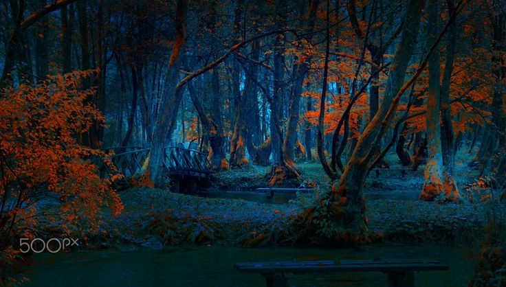 """"""" Mystical Forest """""""