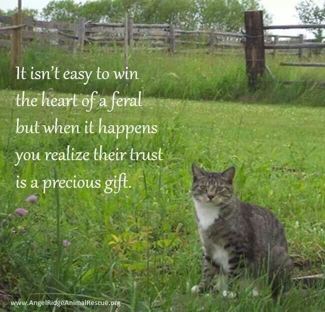 Ferals deserve love too... we have adopted a group of them... spay and neuter your pets ..