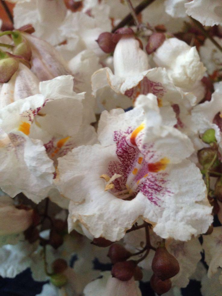 Mazzolino di fiori