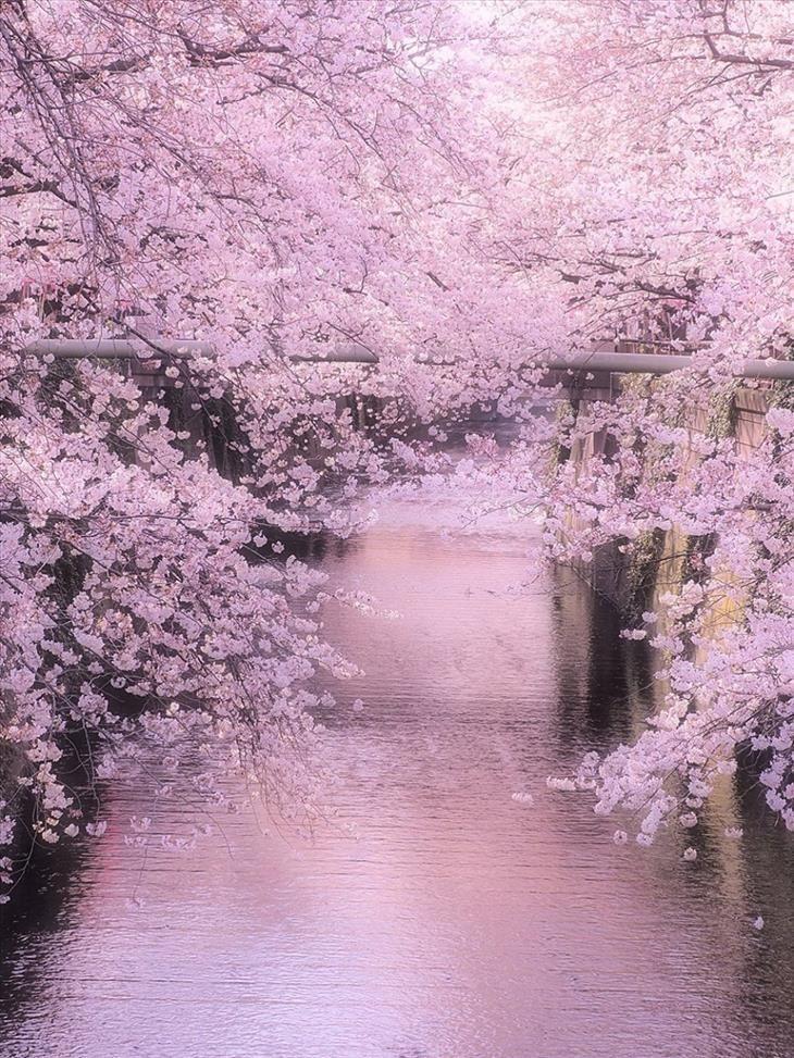 1028 besten *TREES & SHRUBS* Bilder auf Pinterest | Kirschblüten ...