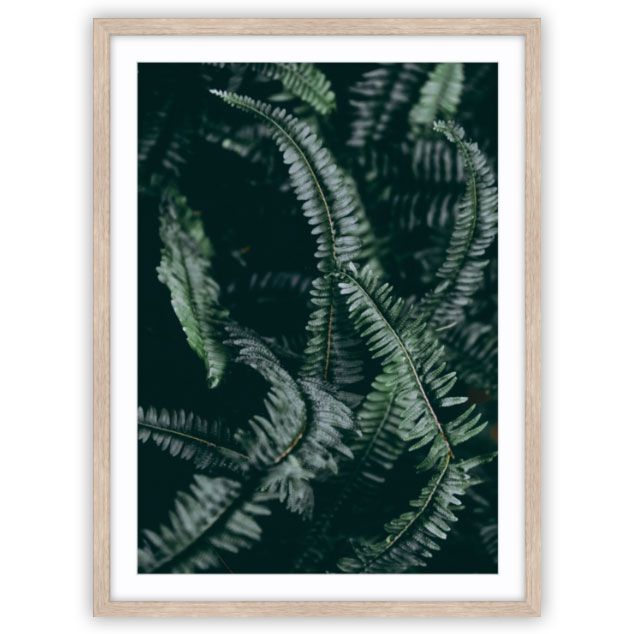 Dark Foliage 2 of 2 Photo by Elemental Prints | Interior Wall Art. www.elementalprints.com.au