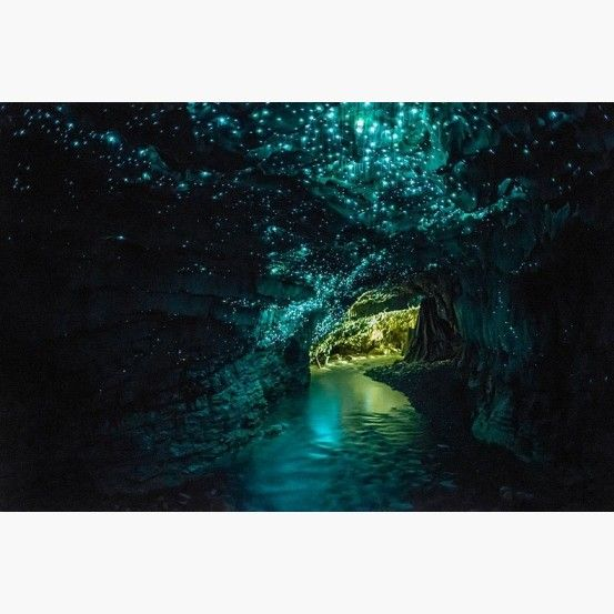 Glow Worm Cave Tour, Charleston, South Island. #thekiwicollective #newzealand #newzealandsfinest