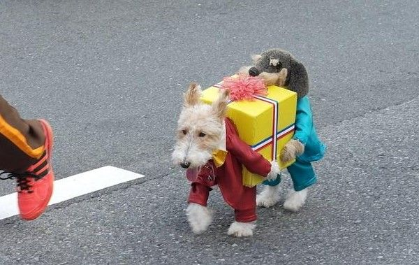 Dog Dressed as Two Dogs Holding a Present by Francois Arias via boingboing  http://boingboing.net/2012/12/02/dog-dressed-as-two-dogs-holdin.html  #Dog #Costume