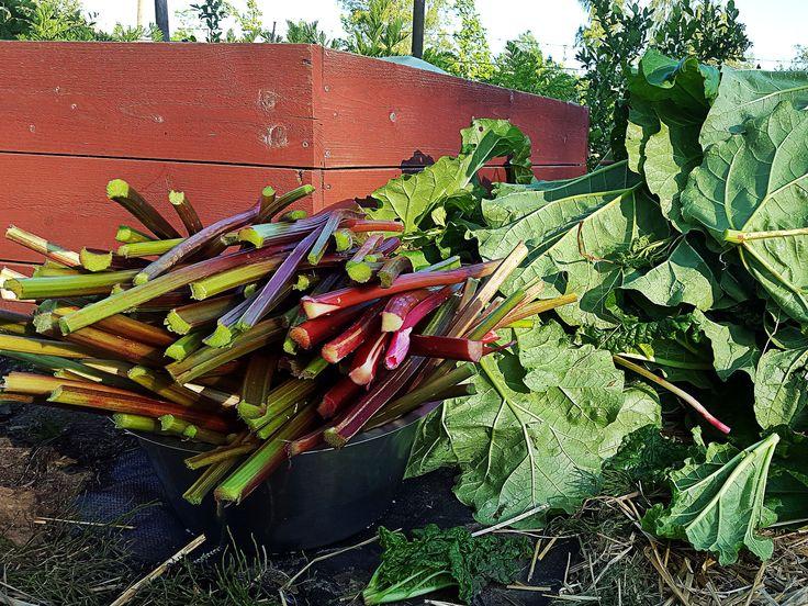 Rabarber är inte bara en grönsak att göra kräm och saft och paj av. Jag kokar enkel sylt under tidig och sen sommar. Barnen älskar den.