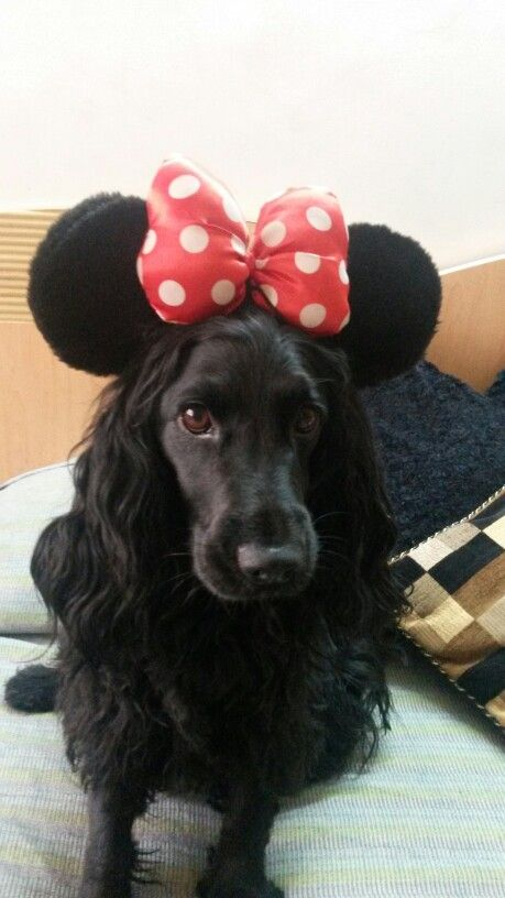 My minnie mouse....disneyland babe