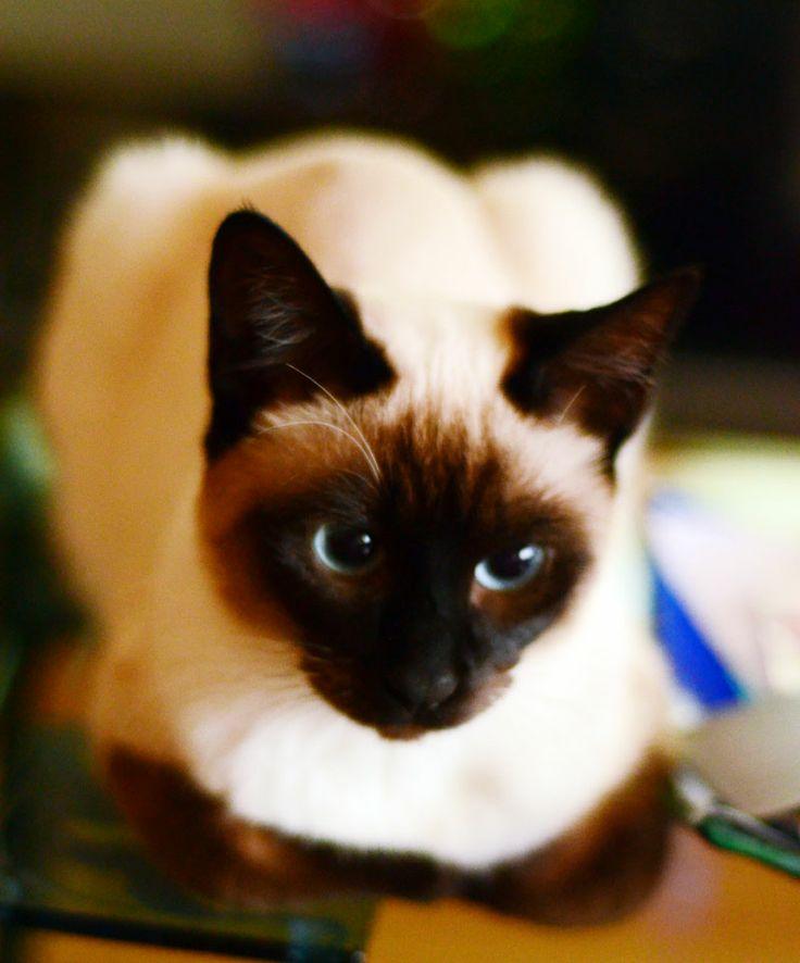 Sevimli yavru kedilerin fotoğraflarda büyüme hikayesi :)