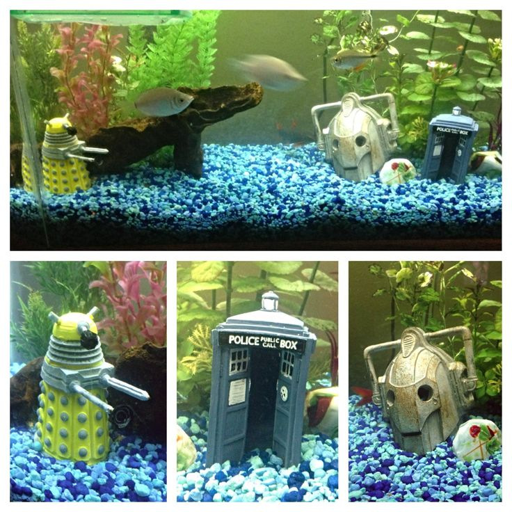 The 25 best ideas about fish tank themes on pinterest for Fun fish tank