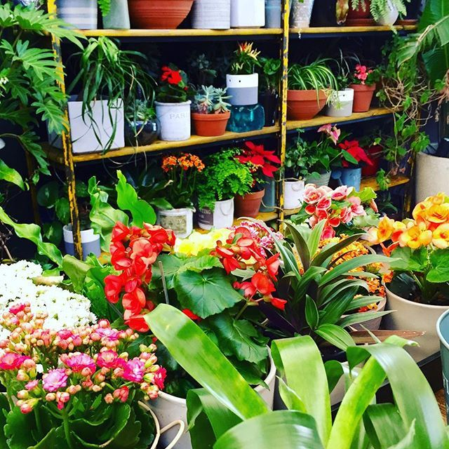 New shipment of flowers and greenery for the Botanical - come for the Wednesday $19 Beef Rib special, stay for the scenery #theroyalleichhardt #theroyalbotanical #spring #colour #ribs