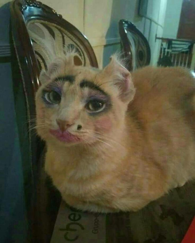Кот проститутка проститутку пару
